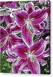 Pink Lillies Acrylic Print