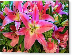 Pink Lily Acrylic Print by Adrian Evans