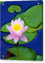 Pink Lily Acrylic Print