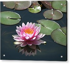 Pink Lily With Reflection Acrylic Print