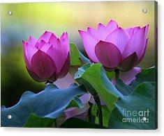 Pink Lotus Acrylic Print by Sabrina L Ryan