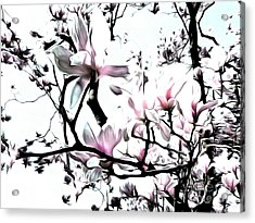 Acrylic Print featuring the photograph Pink Magnolia - In Black And White  by Janine Riley