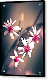 Acrylic Print featuring the photograph Pink by Michaela Preston