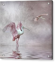 Pink Mist Acrylic Print by Brian Tarr