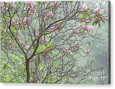 Acrylic Print featuring the photograph Pink Mountain Laurel by Chris Scroggins