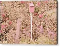 Pink Nesting Box Acrylic Print by Bonnie Bruno