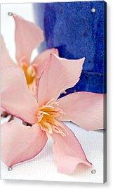 Pink Oleander Flowers Acrylic Print by Frank Tschakert