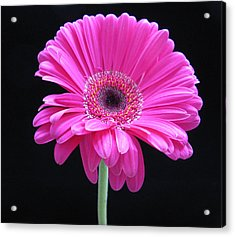 Acrylic Print featuring the photograph Pink On Black by Patricia Januszkiewicz