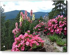 Pink On The Mountain Acrylic Print by Jody Neumann
