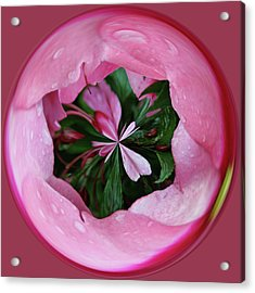 Acrylic Print featuring the photograph Pink Orb by Bill Barber