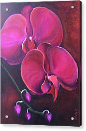 Pink Orchid Acrylic Print by Silvia Philippsohn