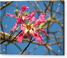 Acrylic Print featuring the photograph Pink Orchid Tree by Carla Parris