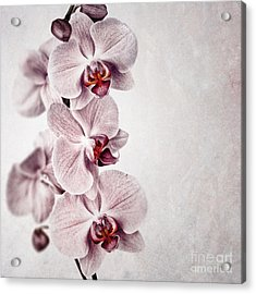 Pink Orchid Vintage Acrylic Print by Jane Rix
