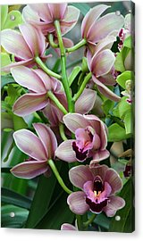 Acrylic Print featuring the photograph Pink Orchids 2 by Ann Bridges
