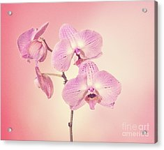Acrylic Print featuring the photograph Pink Orchids 2 by Linda Phelps
