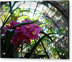 Pink Orchids Acrylic Print by Glenn McCarthy Art and Photography