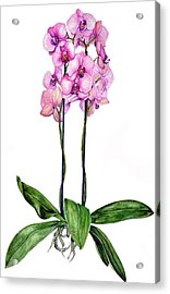 Acrylic Print featuring the painting Pink Orchids by Heidi Kriel