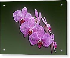 Acrylic Print featuring the photograph Pink Orchids by John Haldane