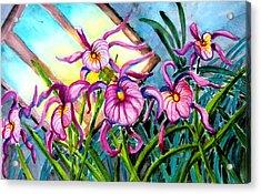 Pink Orchids Under Skylight Acrylic Print by Helen Kern