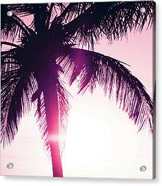 Pink Palm Tree Silhouettes Kihei Tropical Nights Acrylic Print by Sharon Mau