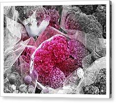 Pink Paradise Acrylic Print