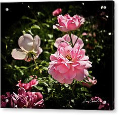 Acrylic Print featuring the photograph Pink Passion  by Joann Copeland-Paul