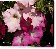 Pink Pastels Acrylic Print by Judy  Waller