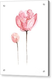 Pink Peonies Watercolor Painting Acrylic Print