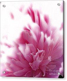 Pink Peony Acrylic Print by Addie Hocynec
