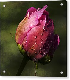 Acrylic Print featuring the photograph Pink Peony Bud With Dew Drops by Patti Deters