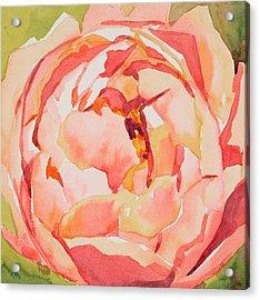 Pink Peony Glow  Acrylic Print by Jo  Mackenzie
