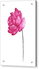 Pink Peony, Nursery Room Print, Baby Girl Kids Room Decoration,  Acrylic Print
