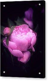 Pink Peony Acrylic Print by Philippe Sainte-Laudy