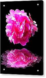Pink Peony Reflections Acrylic Print