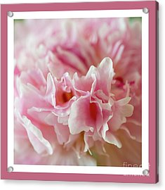 Acrylic Print featuring the photograph Pink Perfection by Wendy Wilton