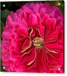 Pink Perky Zinna  Acrylic Print by Patricia A Williams