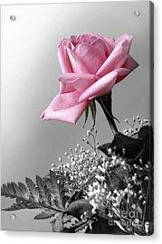 Pink Petals Acrylic Print by Carlos Caetano