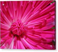 Pink Petals Acrylic Print by Inspired Arts