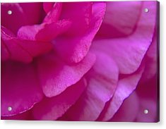 Pink Petals Acrylic Print by M Valeriano