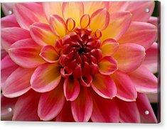 Pink Petals Acrylic Print by Sonja Anderson