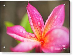 Pink Plumeria Detail Acrylic Print by Charmian Vistaunet