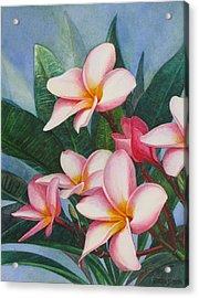 Pink Plumerias Acrylic Print by Karen  Sioson
