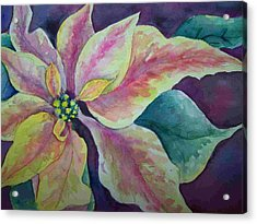 Pink Poinsettia Acrylic Print by Sandy Collier
