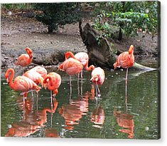 Pink Reflections Acrylic Print by Gloria Byler