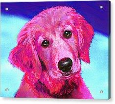 Pink Retriever Acrylic Print by Jane Schnetlage
