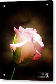 Pink Rose 2 Acrylic Print by Inspirational Photo Creations Audrey Woods