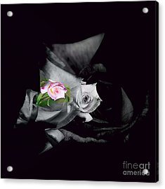 Pink Rose 2 Shades Of Grey Acrylic Print