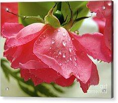 Pink Rose #3 Acrylic Print