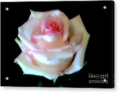 Pink Rose Bud Acrylic Print by Jeannie Rhode