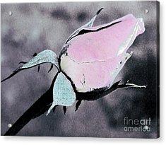 Pink Rose Bud Acrylic Print by Karen Lewis